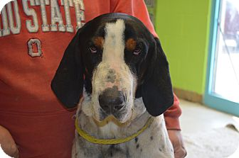 Hound (Unknown Type) Mix Dog for adoption in New Manchester, West Virginia - Howard