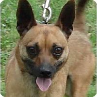 Adopt A Pet :: Cherokee - Kingwood, TX