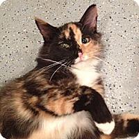 Adopt A Pet :: Maryann - Byron Center, MI
