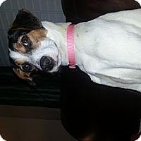 Adopt A Pet :: Grace Sprinkles - Marietta, GA