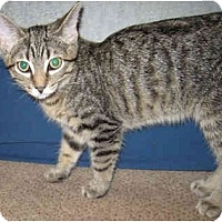 Adopt A Pet :: Simba - Solon, OH