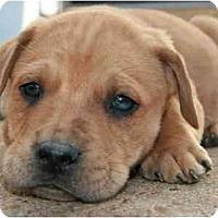Adopt A Pet :: Dublin - Richmond, VA