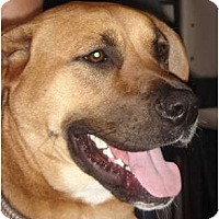 Adopt A Pet :: Leila - Lake Forest, CA
