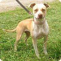 Adopt A Pet :: Tiki - Albany, NY