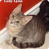 Adopt A Pet :: Lady Lynn - Bentonville, AR