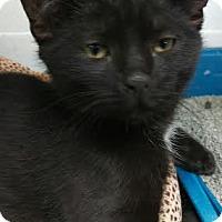 Adopt A Pet :: Issac Hanson - Richboro, PA
