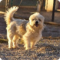 Adopt A Pet :: Joe - Post, TX
