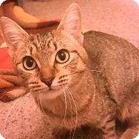 Adopt A Pet :: Waverly - Addison, IL
