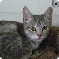 Adopt A Pet :: Cher - Massapequa, NY