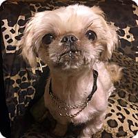 Adopt A Pet :: CADBURY - Los Angeles, CA