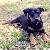 Adopt A Pet :: *Ursula - PENDING - Westport, CT