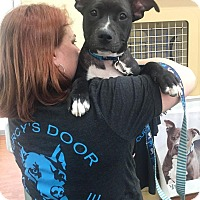 American Staffordshire Terrier/American Pit Bull Terrier Mix Puppy for adoption in Medina, Ohio - Sassy