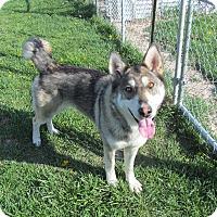 Adopt A Pet :: Shawnee - Staunton, VA