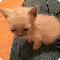 Adopt A Pet :: Bruce Banner - Herndon, VA