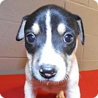 Adopt A Pet :: Mac - Oxford, MS