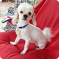 Adopt A Pet :: Oscar - Studio City, CA