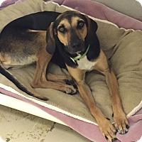 Adopt A Pet :: Sally - Jupiter, FL