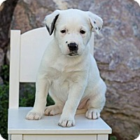 Adopt A Pet :: Twinkie - Salt Lake City, UT