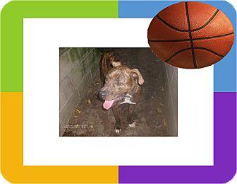 Bullmastiff Mix Dog for adoption in KELLYVILLE, Oklahoma - TYGE