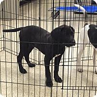 Adopt A Pet :: Brutus - Hohenwald, TN