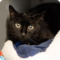 Adopt A Pet :: Buddy - San Luis Obispo, CA