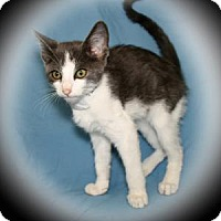Adopt A Pet :: Astrid - Bradenton, FL