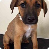 Adopt A Pet :: Natalie - Hinsdale, IL