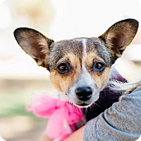 Adopt A Pet :: GinGin - Los Angeles, CA