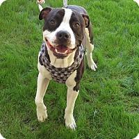 Adopt A Pet :: Tio - Scottsdale, AZ