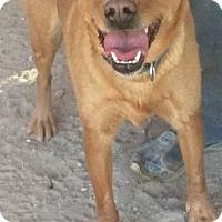 Adopt A Pet :: Dahlia - Las Vegas, NV