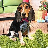 Adopt A Pet :: Dakota - Castro Valley, CA