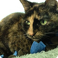 Adopt A Pet :: Sadie - Fairfax, VA