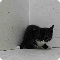 Adopt A Pet :: A363989 - Orlando, FL