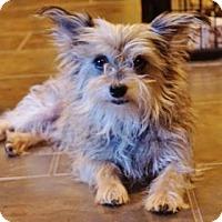 Adopt A Pet :: Phoebe - LaHarpe, KS