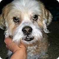 Adopt A Pet :: Niki - Ft. Lauderdale, FL