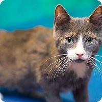 Adopt A Pet :: Petrie - Millersville, MD