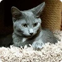 Adopt A Pet :: Kierra - Savannah, GA