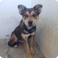 Adopt A Pet :: A010292 - Rosenberg, TX