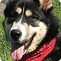 Adopt A Pet :: Lobo - New Hartford, CT
