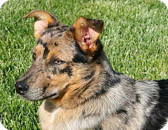 Porter | Adopted Dog |...