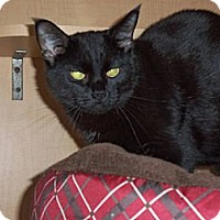 Adopt A Pet :: Licorice - Salem, OH