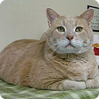 Adopt A Pet :: Barney - Lakewood, CO