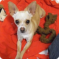 Adopt A Pet :: Jewels - Wickenburg, AZ