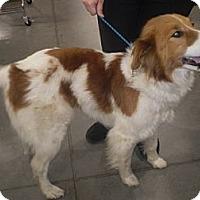 Adopt A Pet :: Martha - Orange Cove, CA