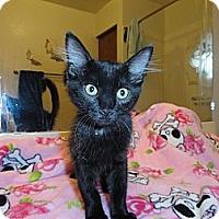 Adopt A Pet :: Isabelle - Phoenix, AZ