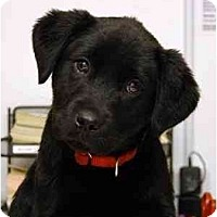 Adopt A Pet :: Annabel - Cumming, GA