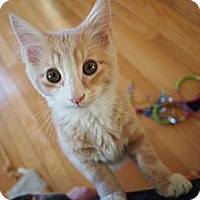 Adopt A Pet :: Travis - Bedford, MA