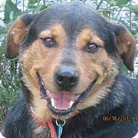Adopt A Pet :: Bear - Bakersville, NC