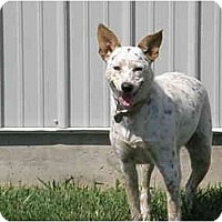 Adopt A Pet :: Cookie - Meridian, ID