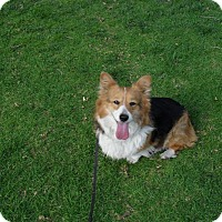 Adopt A Pet :: Bunny - Lomita, CA